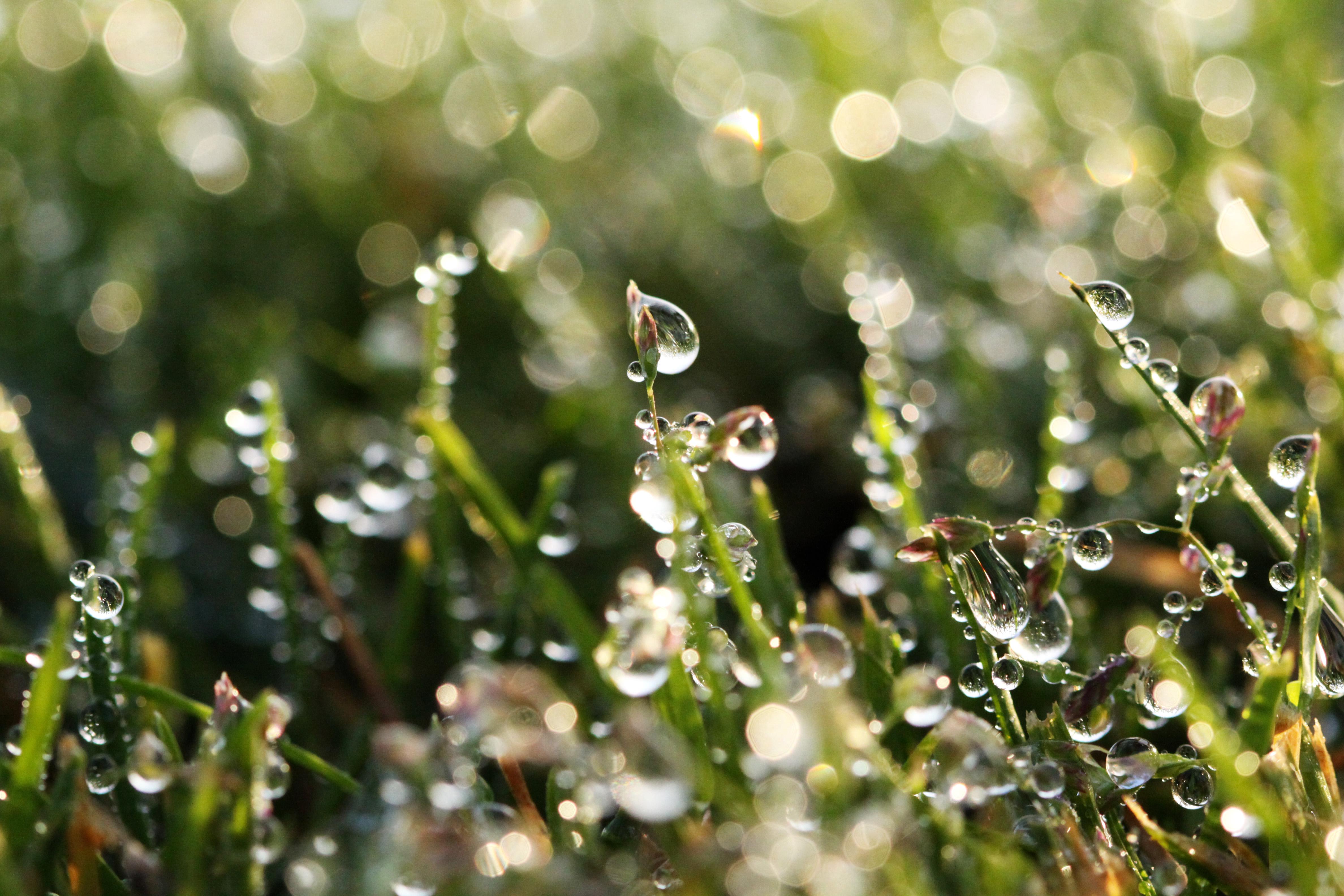 Nature S Pearls Macro Moments
